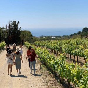 Walking through vineyards during the Alella Wine and Food Experience run by The Barcelona Taste